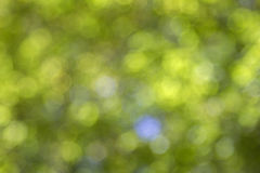 Green bokeh Stock Photography