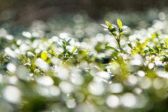 Green bokeh Royalty Free Stock Photo