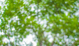 Green bokeh Royalty Free Stock Images