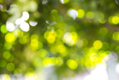 Green bokeh from tree Stock Images