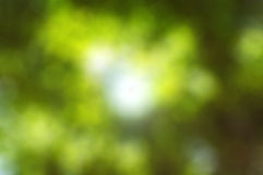 The Green bokeh of the tree Royalty Free Stock Photo