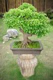 Green bonsai Stock Photo