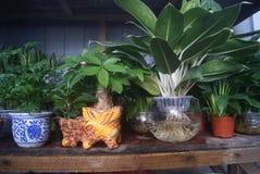 Green bonsai plants Royalty Free Stock Photos