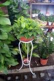 Green bonsai plants Stock Image