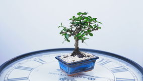 A green bonsai tree rotates on the dial of a large clock. An idea for a theme about time and nature