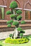 Green bonsai tree Stock Photo