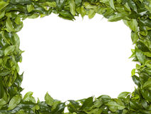 Green border Royalty Free Stock Photos