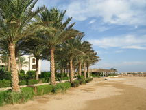Green border of the beach palm trees in Africa. Turkey Royalty Free Stock Image