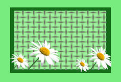 Green Border With Daisies. Green border or card with daisies over grid background Stock Image