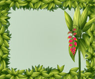 A green border Royalty Free Stock Photo