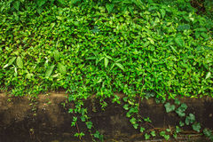 Green botany background Royalty Free Stock Photography