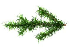 Green bough. Isolated green branch of pine royalty free illustration