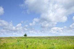 Green boundless field. Summer landscape beautiful clouds in the blue sky over the boundless field on a sunny day Royalty Free Stock Images