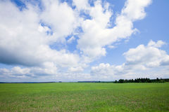 Green boundless field. Summer landscape beautiful clouds in the blue sky over the boundless field on a sunny day Royalty Free Stock Photos