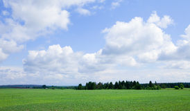 Green boundless field. Summer landscape beautiful clouds in the blue sky over the boundless field on a sunny day Stock Photos