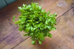 Green bouquet of juicy parsley stock image