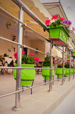Green bowls of flowers on yellow house veranda Stock Images