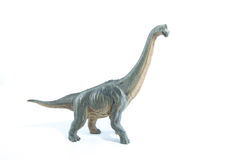 Green Brachiosaurus altithorax from the Late Jurassic full body. White background Stock Photo