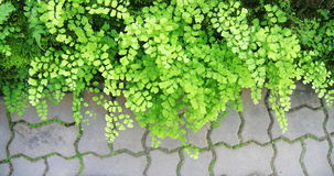 Green bracken leaves Stock Photos