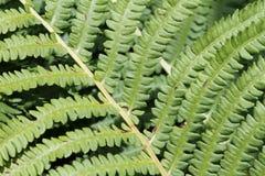 Green bracken textured foliage Royalty Free Stock Photos