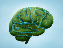 Green brain. Green land with rivers stock illustration