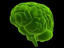 Green brain Royalty Free Stock Photos