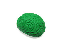Green Brain Model on White Background. Green plastic model of the hunam brain isolated on white background. Contains Clipping Path royalty free stock image