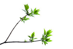 Green Branch Stock Photography