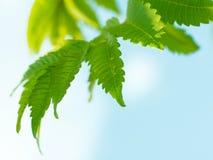 Green branch Royalty Free Stock Photos