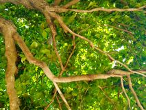 Branch of big tree Royalty Free Stock Photography