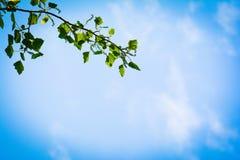 Green branch on blue summer sky, frame Stock Image