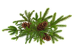 Green branch of Christmas tree with pine cones isolated on white Stock Photos