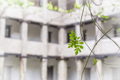Green branch. Closeup of green branch in front of building Royalty Free Stock Image