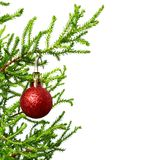 Green branch of decorative home pine tree with red Christmas-tre. E ball. Isolated on white background with copy space Royalty Free Stock Photos