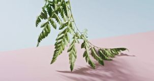 Smooth slow movement of a fern branch with green foliage touching a duotone pink blue background. Shadows from branch stock video