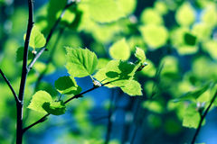 Green branch, forest. Photo of green branch, summer forest royalty free stock image