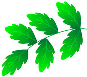 Green branch Stock Image
