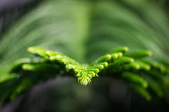 Green branch. Image of a green branch with shallow depth of field Stock Photography