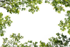 Green branch leaf frame for text input Stock Photos