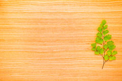 Green branch  on oak texture Stock Image