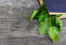 Green branch in old book on rustic background. Free copy space.