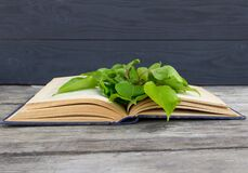 Green branch on open book on rustic background. Free copy space.