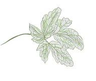 Green branch of a plant Stock Photos
