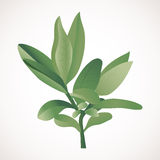 Green branch. Green spring leaves on a branch Royalty Free Stock Images