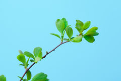 Green Branch Stock Photos