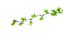 Green Branch Stock Photo