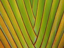 Green branch texture banana tree background Royalty Free Stock Photo