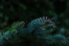Green branch of thorny leaves stock photography