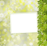 Green branch of  tree and paper frame on abstract background Stock Image
