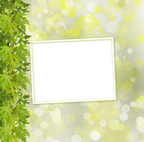 Green branch of  tree and paper frame on abstract background Royalty Free Stock Image